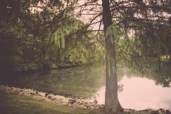 Outdoors. (Angela.Dee) Tags: tree reflection water green light leaf dof depthoffield canon 6d 24105mml cy365