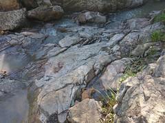 20160716_144709 (StephenMitchell) Tags: adelaidegreenhills nature organic trees gully valley hill mountain blackwood belair edenhills southaustralia trek walk creek rock stone
