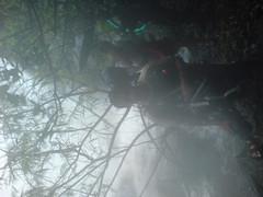DSC03541 (Gokul Chakrapani) Tags: waterfalls karnataka westernghats bolle charmadi