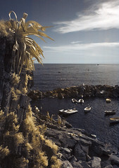 Dolce vita (Lolo_) Tags: ir infrared italia italy agave riomaggiore cinque terre unesco port liguria mditerrane mer sea harbor rocher coast infrarouge italie ligurie bateau boat cliff zodiaque gold or dor jaune