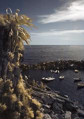 Dolce vita (Lolo_) Tags: ir infrared italia italy agave riomaggiore cinque terre unesco port liguria méditerranée mer sea harbor rocher coast infrarouge italie ligurie bateau boat cliff zodiaque gold or doré jaune