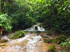 Xilitla, San Luis Potos. (Gerardo Stfano) Tags: mxico sanluispotosi waterfall pozas nature slp xilitla