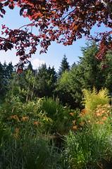 DSC_0981-1 (Chaumurky) Tags: h garden