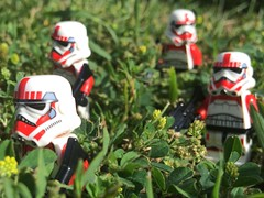 Enforcing the will of the Emperor (Kay The Warden) Tags: grads nature stormtrooper trooper shock starwars lego