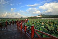 After the rain... (yvone042488) Tags: bridge lotus pond leaves flowers sky clous rain summer