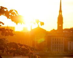Hermans 26 (Helen White Photography) Tags: hermans restaurant vegetarian stockholm terraced gardens view sunset summer