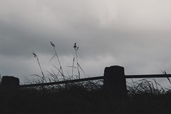 (jean_pichot1) Tags: gothenburg fence up clouds gray overcast sky silhouette foreground post hill weeds tall grass