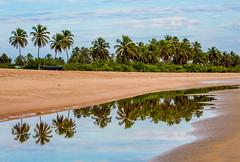 Moitas Beach - CE (Mizael Brando) Tags: amontada beach cear paraso praiademoitas