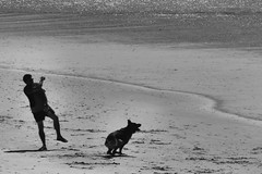 Fetch (shama rama) Tags: northcarolina nc beach ocean surfcity dog fetch alsatian germanshepherd