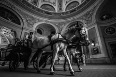 the old Vienna (CHCaptures) Tags: sonyilce7 voigtlnder 15mm super wide angle lens horse fiaker vienna wien pferd coach carriage kutsche hofburg blackandwhite monochrome schwarzweis