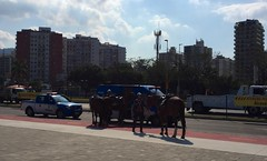 mounted police arriving