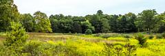 giralda farms preserve-1 (Visual Thinking (by Terry McKenna)) Tags: giralda farms madison nj
