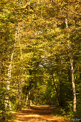Dbut de l'automne (Tophe54) Tags: fort forest autumn automne grenn vert arbre feuillage nature chemin foliage tree path sony tamron 70300mm france