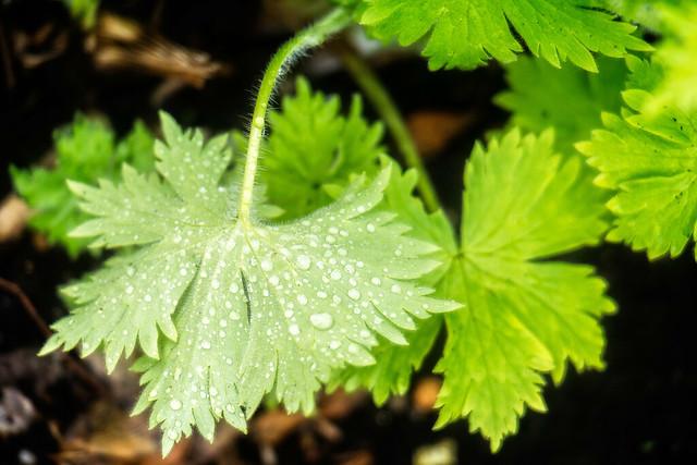 park plant london wet water rain garden leaf samsung dew lightroom hyepark nx2000 perfectphotosuite