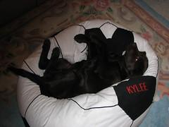 feb 2008 084 (ranae_willer) Tags: feb2008