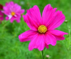 NZA-05 - 2015-02-26 - DSC_7632 (bix02138) Tags: newzealand flora northisland napier february26 2015 napiernewzealand aotearoanewzealand clivesquare day5newzealandaustralia2015