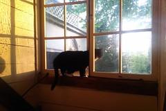 Cat in the window (Michiel2005) Tags: holland window netherlands animal cat sunrise kat nederland dier poes raam zonsopgang