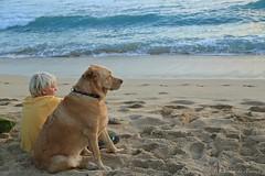 06012015_010_ (ALOHA de HAWAII) Tags: hawaii oahu waikikisunset watchingsunsetwithdog