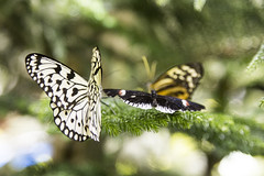 The Butterfly Conservatory (Geise Architecture) Tags: newyork animals museum natural earth muse eua museo animais naturalhistorymuseum novaiorque novayork
