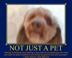 Bet Than Medicine (Tobyotter) Tags: poster frank fdsflickrtoys motivator dachshund