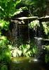 ~Oct 2009 Fairchild Gardens #2~ (endemanf) Tags: miamiflorida fairchildbotanicalgardens tropicallandscapes tropicaljunglegardens