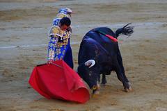El Fandi, Alicante (Fotomondeo) Tags: toro toros plazadetoros corridadetoros torero matador bull bullfight bullfighter alicante alacant valencia espaa spain fujifilmxm1 elfandi