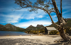 Boat Shed and Tree (joshuawoodhead) Tags: mountain tree nature landscape boat shed tasmania cradle