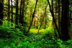 B1BBEST VAN DOZER WOODS-03803 (Gerry Slabaugh) Tags: oregon coast gerryslabaugh green van dozer woods trees mossy