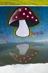 Cogumelo (Gabriel_Azambuja) Tags: click colors cogumelo nikon reflexo d3200 detail