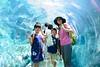 2016 北海道D6 4x6 3333 (chaochun777) Tags: 北海道 旭山 動物園 露營 自由行 猴子 長臂猿 猩猩 雲豹 花豹 老虎 獅子 北極熊 企鵝