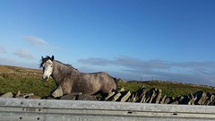 12219501_10100103134157070_2516407152011505462_n (dontcallmecasss) Tags: animals theburren ireland wildhorses countyclare