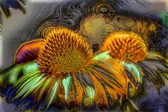 La sazn del verano (seguicollar) Tags: plantas flower flor margaritas naranjas verdes morados colores colorido brillante airelibre virginiasegu photomanipulacin imagencreativa artedigital arte art artecreativo enteredinsyb