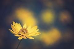 Flower (Kajfash) Tags: canoneos5dmarkii canonef100mmf28lmacroisusm flower flowers kwiat kwiaty bokeh macro