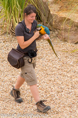 DSC_2334 (Pascal Gianoli) Tags: perroquet beauval bird oiseau parrot zoo zooparc saintaignansurcher centrevaldeloire france fr pascal gianoli pascalgianoli