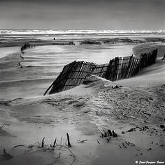 0389 - Cte d'Opale, 1974 (ikaune) Tags: nb bw noiretblanc blackandwhite ikaune argentic argentique monochrome rolleiflex moyenformat ctedopale sable plage dunes