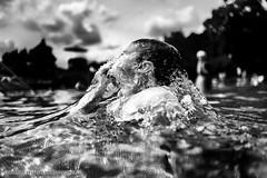 fluid_03 (niki s.) Tags: white black water austria dive diving fluid swimmingpool graz nikolaus niki erste wahl schreinlechner