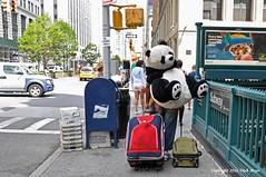 He's Not Heavy He's My Panda (Trish Mayo) Tags: panda stuffedanimal streetphotography notrealanimals gnneniyisi thebestofday