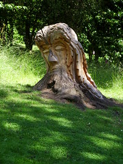Pannett foliate head (Nekoglyph) Tags: yorkshire whitby pannettpark wood carved sculpture publicart trees green greenman foliate head face steveiredale chainsaw stump shadows