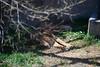 2016 北海道D6 4x6 3445 (chaochun777) Tags: 北海道 旭山 動物園 露營 自由行 猴子 長臂猿 猩猩 雲豹 花豹 老虎 獅子 北極熊 企鵝