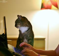 Hmm looks good (kadryskory) Tags: cat animal pet indoor kadryskory
