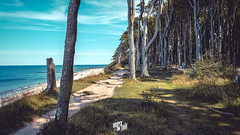 Ghostwood Nienhagen (ikopix) Tags: gespensterwald nienhagen ostsee eastsea wald wood beach nikon nikkor d7100 urlaub reisen travel