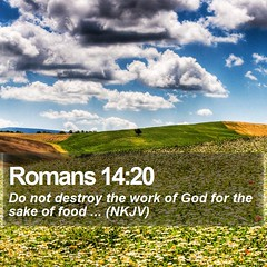 Daily Bible Verse - Romans 14:20 (daily-bible-verse) Tags: thankful pastor scriptures preaching love dailybible jesusislord