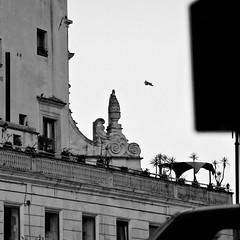 scorci (point camera) Tags: scorci architettura architecture bianco nero black white monocolore monochrome balcony balcone terrazzo gazebo volo urban galatina biancoenero