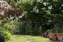 Garden Fence (Gisou68Fr) Tags: fence garden jardin clture printemps spring 2016 fleurs flowers