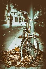 bicycle (amargureiro) Tags: 50mmf18af bicycle street streetphotography leaves brown city d80 nikon mallorca palmademallorca