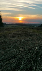 Lines ... Field Fieldscape Sunset      Hay Russia  at   (Almena14) Tags: lines field fieldscape sunset      hay russia