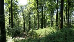 Wandertour 13.08.2016 Hochheide (diemelwalker) Tags: wanderung willingen hochsauerland hochheide diemelwalker diemelbullys deutschland uplandsteig langenberg
