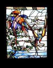 Morse Museum (ktmqi) Tags: stainedglass louisctiffany florida winterpark morsemuseum decorativearts josephbriggshouse plumtree birds