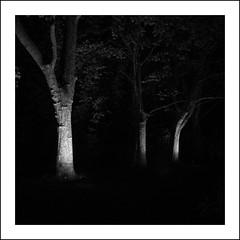luz na escurido (light in the darkness) (Francisco (PortoPortugal)) Tags: 1962016 20160723fpbo34552 pb bw monocrome quadrada square serralves porto portugal portografiaassociaofotogrficadoporto rvores trees light luz noite night franciscooliveira