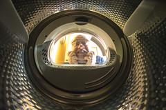 Horror, my camera in the washing machine ... (Agust Sentelles) Tags: barcelona leica lightpainting rolleiflex zeiss photoshop canon lumix nikon raw fuji minolta pentax sony samsung sigma lanzarote olympus girona panasonic tokina hasselblad ibiza d750 fujifilm digitalcamera dynax tamron mallorca bara formentera fotodigital yashica fujinon hdr voigtlnder menorca tarragona metz manfrotto d800 lleida nissin profoto d610 eos5d d40 samyang d3200 gopro benro apsc d810 digitalfoto 5ds d5000 d7100 d700 d3000 d3s phottix eos7d d5200 d5300 d7000 d3300 d5100 superfotodigital d3100 gloxy 5dsr